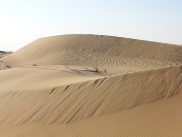 Abu Dhabi Desert: dune patterns forming