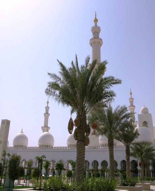 Abu Dhabi Grand Mosque palm trees