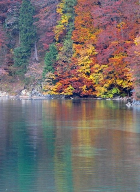 Autumn colours reflected onto the Alpsee Bavaria