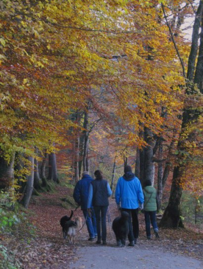 Autumn dog walkers beside Alpsee Hohenschwangau