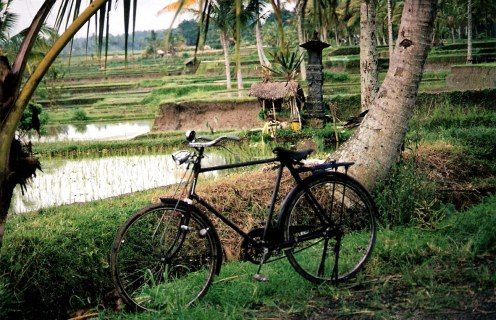 Bali rice field shrine to Dewi Sri