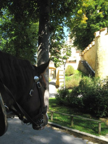 Bavarian Coach Horses waiting at exit from Hohenschwangau Castle Bavaria