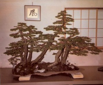 Bonsai conifer forest inside-Omiya Bonsai Village-Tokyo