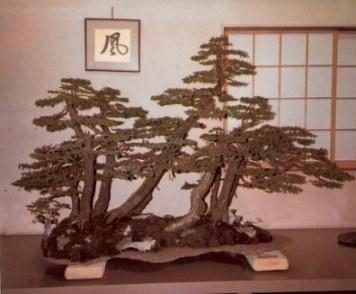 Bonsai conifer forest inside-Omiya Bonsai Village-Tokyo