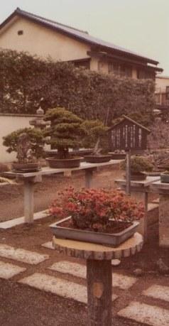 Bonsai trees-Omiya Bonsai Village-Tokyo