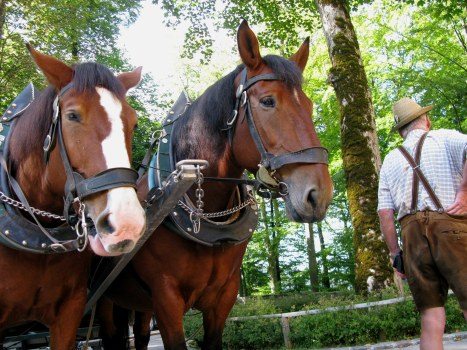 Coach driver in lederhosen and his horses Hohenschwangau Bavaria