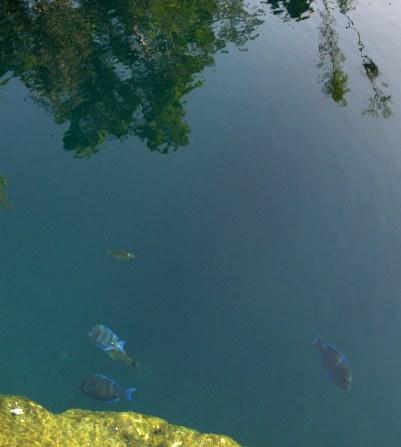 oloured fish Cueva de los Peces Bay of Pigs Cuba