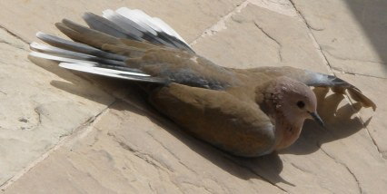 Dubai Madinat Jumeirah visiting sunbathing bird