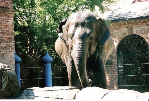Elephant spray at the Audubon Zoo New Orleans