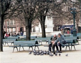 Feeding bird in Paris park