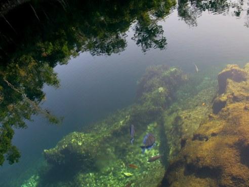 Fish and reflections Cueva de los Peces Bay of Pigs Cuba