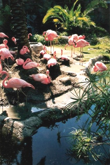 Flamingo pond at the Audubon Zoo New Orleans