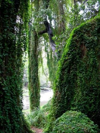 Forest canopy Almendares Park Cuba