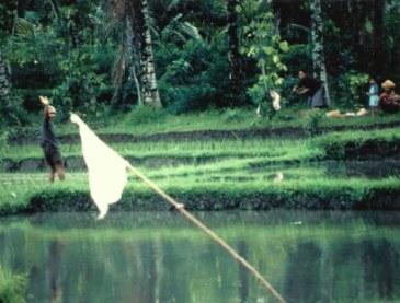 Friendly rice farmers in Bali