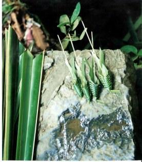Hand-made palm leaf cicadas - Viñales valley - Cuba