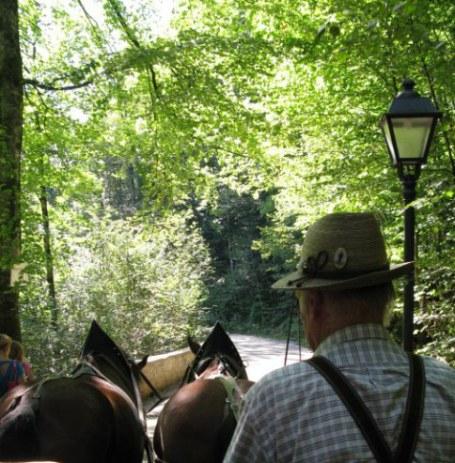 Horse-drawn coach route from Hohenschwangau Bavaria