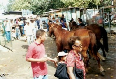 Horses at the agricultural Fair – Havana