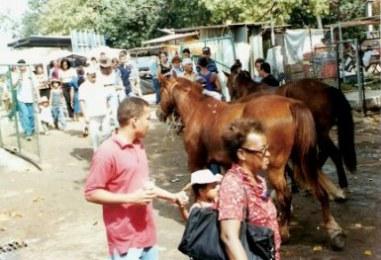 Horses at the agricultural Fair – Havana