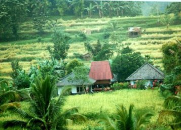 Houses amidst the rice fields in Bali