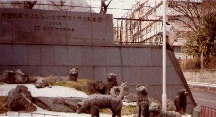 Karafuto dogs at Tokyo Tower