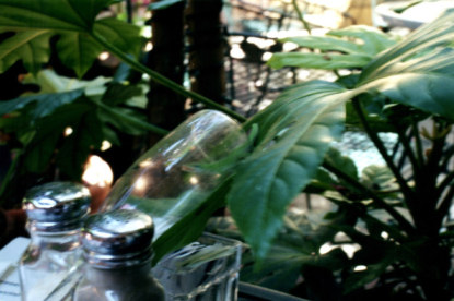 Lizard chasing fly in champagne glass in the French Quarter New Orleans