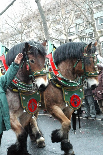 Mainz Fastnacht carriage horses