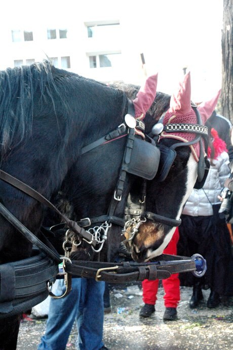 Mainz Fastnacht horses with pink earpieces