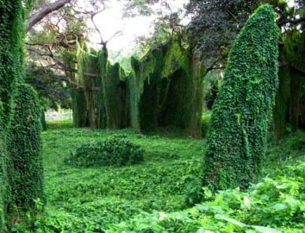 Mystical landscape of Almendares Park Cuba