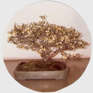 Omiya Bonsai Village Tokyo -Flowering bonsai