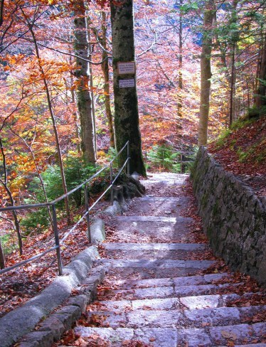 Path from Marienbrucke Neuschwanstein