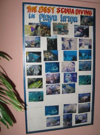 Playa Largo Resort Diving Bay of Pigs Cuba