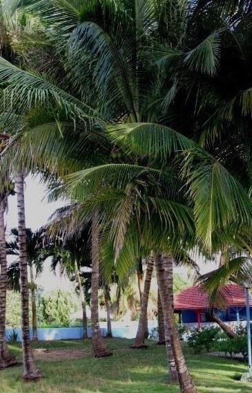 Playa Largo Resort gardens Bay of Pigs Cuba