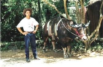 Saddled Water Buffalo - Viñales valley - Cuba