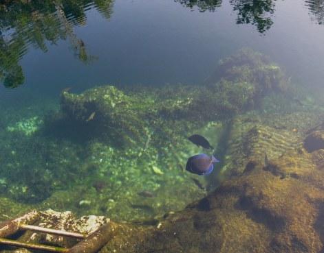 Steps into water of Cueva de los Peces Bay of Pigs Cuba