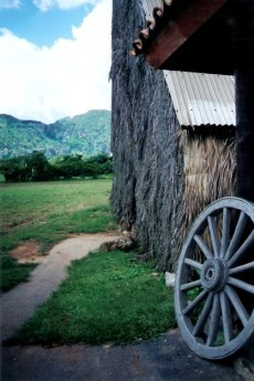 Thatched tobacco drying house - Viñales valley – Cuba
