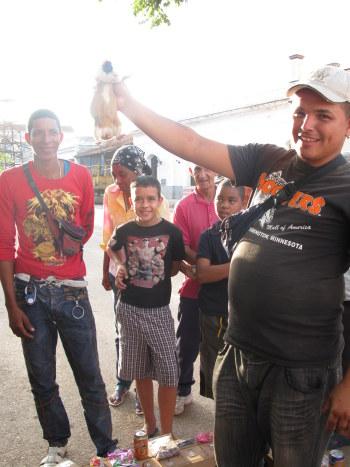 Thumbnail: guinea pig gambling-Cuba