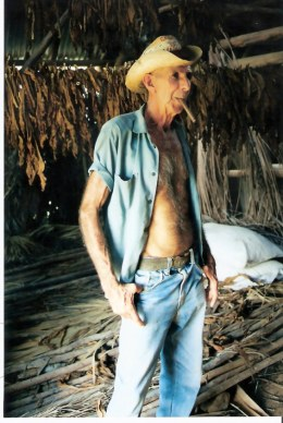 Tobacco farmer by drying tobacco - Viñales valley - Cuba