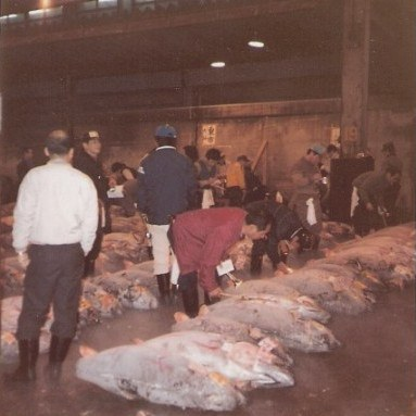 Tokyo Fish Market Tuna laid out for auction