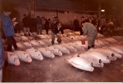 Tokyo Fish Market Tuna numbering the tuna