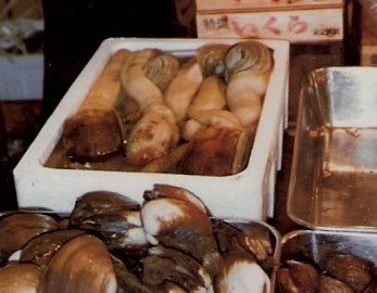 Tokyo Fish Market box of Geoduck Clams