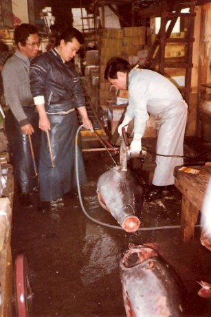 Tokyo Fish Market cutting tuna with electric saw