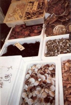 Tokyo Fish Market shellfish and sea anemones