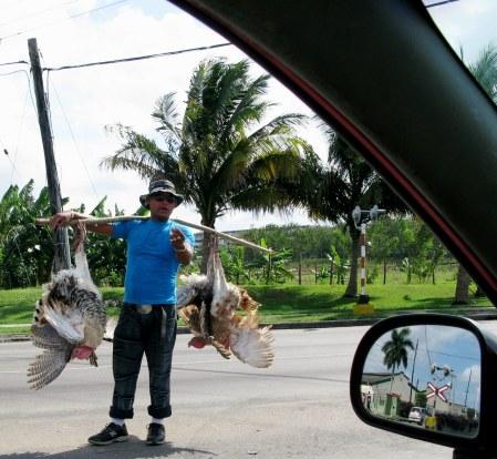 Turkey seller Boyeros Havana Cuba