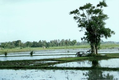 Workers in paddy fields in Bali