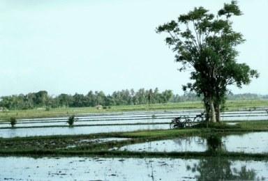 Workers in paddy fields in Bali
