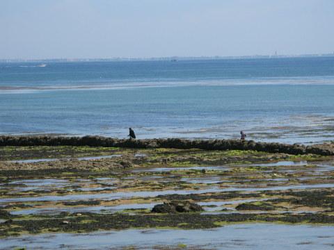 Île d'Oléron St. Denis écluse at low tide