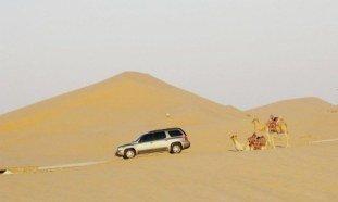Abu Dhabi Desert: Camels & 4WD