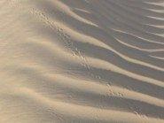 Abu Dhabi Desert tracks