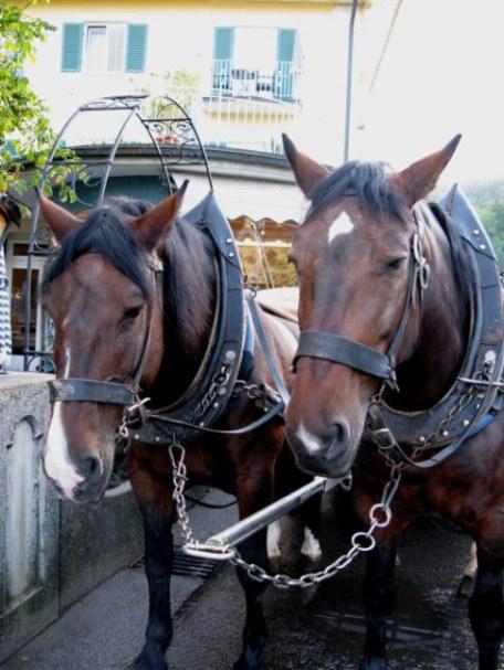 Bavarian Coach Horses Neuschwanstein Castle