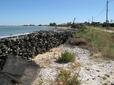 Île d'Oléron oyster stakes and mesh sacks
